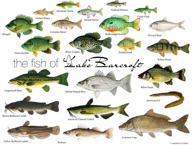 Some lake water fish chart fishing pinterest for Different type of water