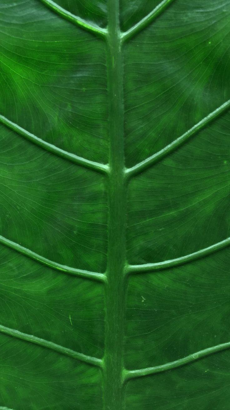 Leaf.jpg (1242×2208)