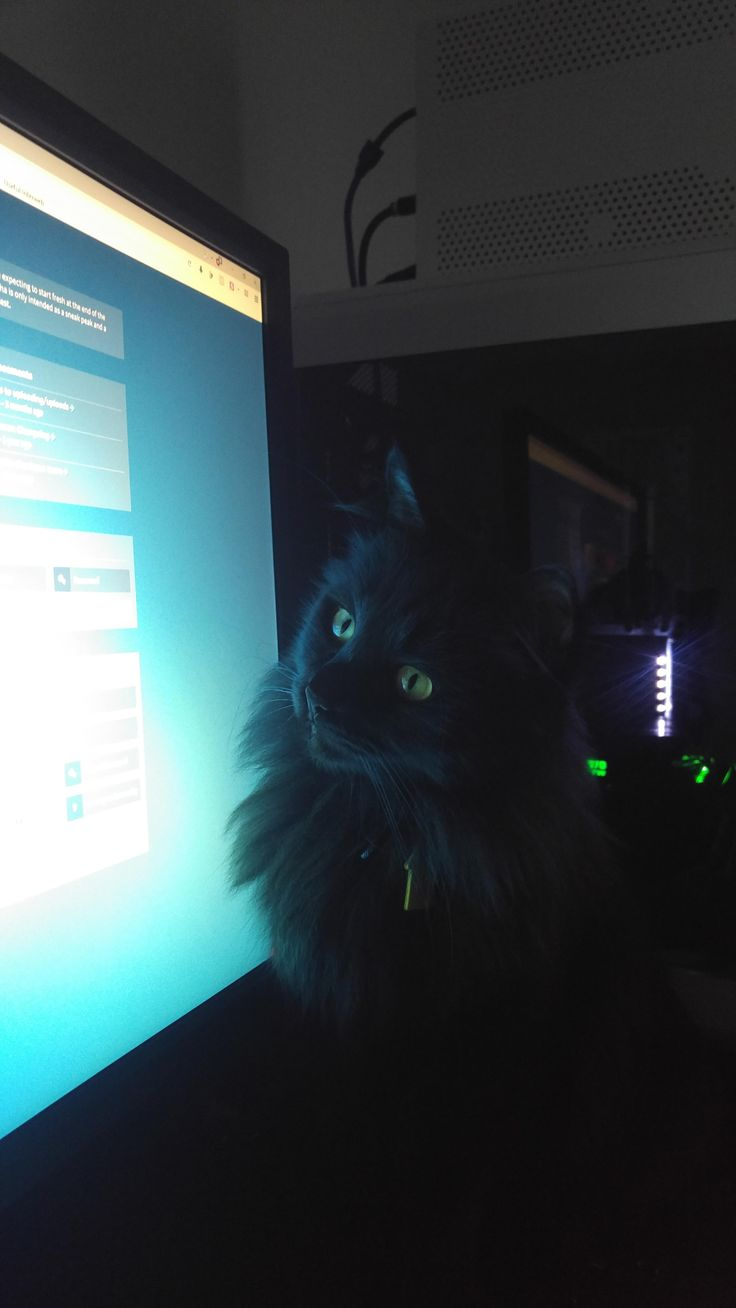 Catching the mouse pointer is her new favorite hobby