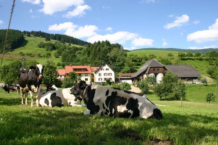 Próximo viaje: Selva negra y Munich ( Alemania)