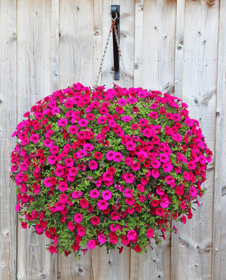 25+ Best Ideas About Hanging Flower Baskets On Pinterest