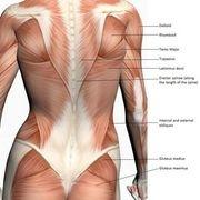 Upper & Lower Back Exercises for Women | eHow