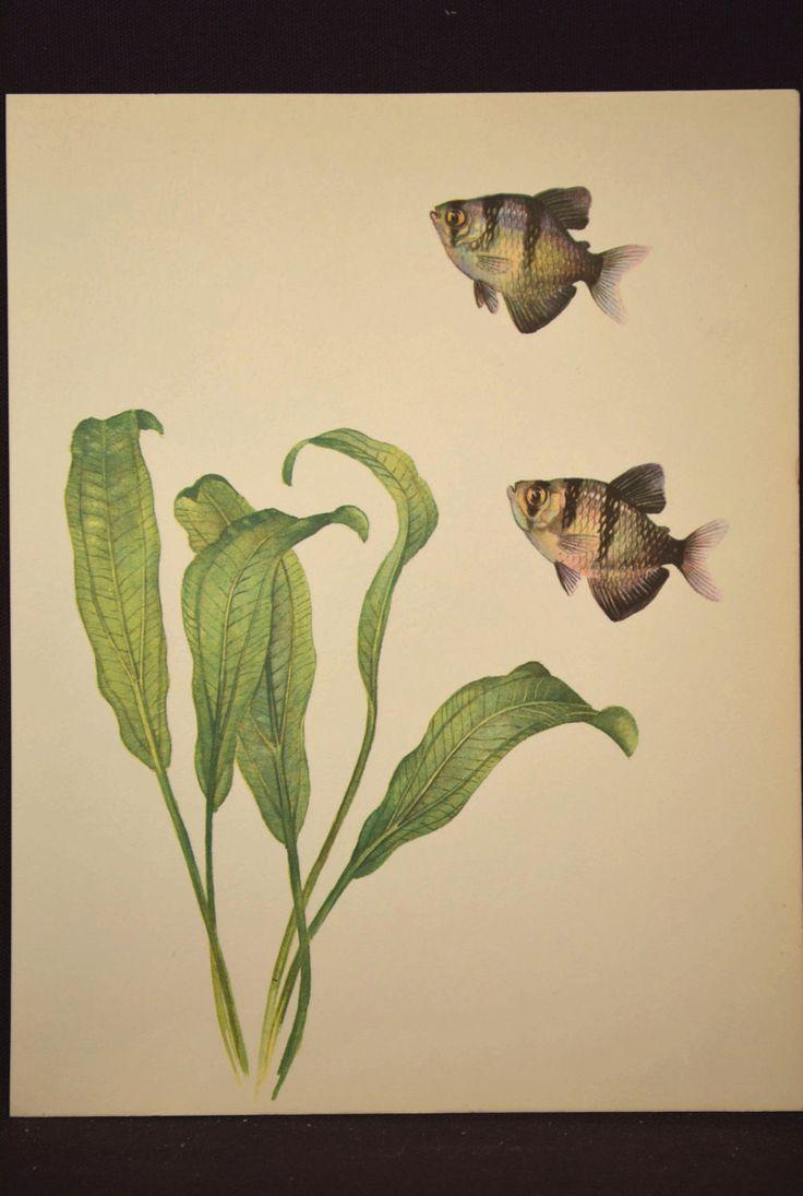 Vintage Fish Print / Aquarium Print / Home Decor / Art Illustration ...