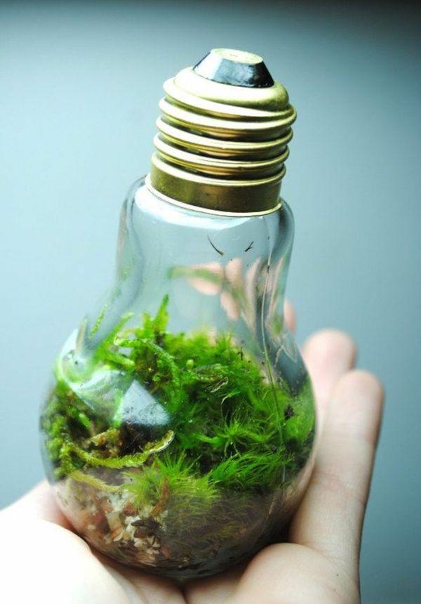 diy projekte alte glühbirnen terrarium moos