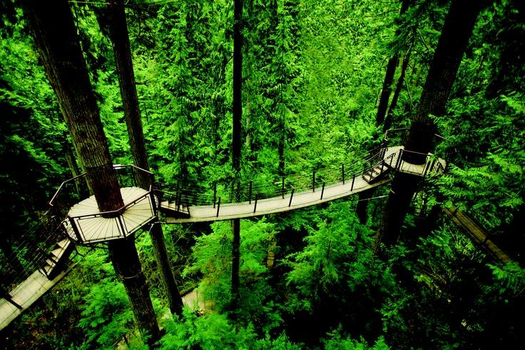Treetops Adventure Capilano Suspension Bridge Park