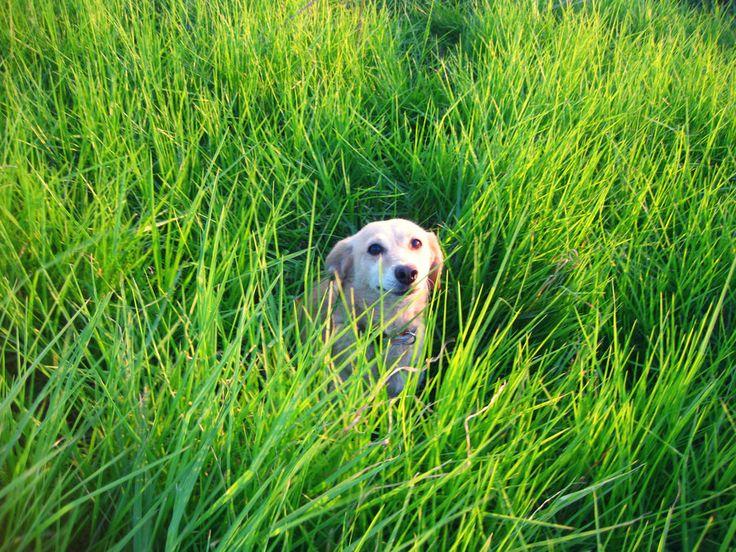 My cute dog Mona Liza's smile by AndrianaS.deviantart.com on @DeviantArt