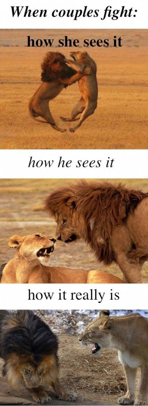 Ha!: Big Cat, Couple Fight, Funny Pictures, Funny Stuff, So True, Funny Animal, So Funny, Men Vs Women, True Stories