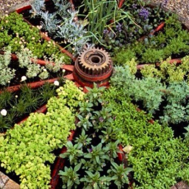 Wagon Wheel Herb Garden Or For A Variety Of Succulents