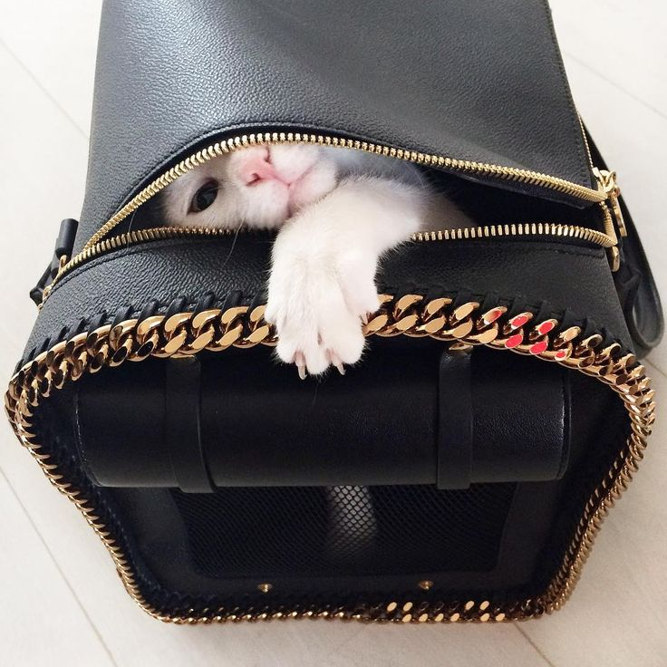 When Stella McCATney travels, she travels in style. Signature #Falabella chain cat carriers only!  Coming soon to #StellaMcCartney.com #StellaMcCATney