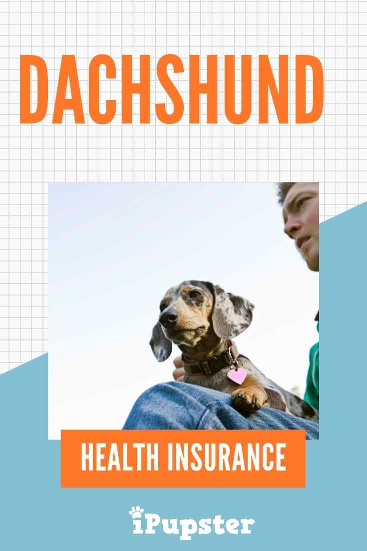 A Close Look At Affordable Dachshund Dog Insurance Plans With Images Free Health Insurance Health Insurance Best Health Insurance