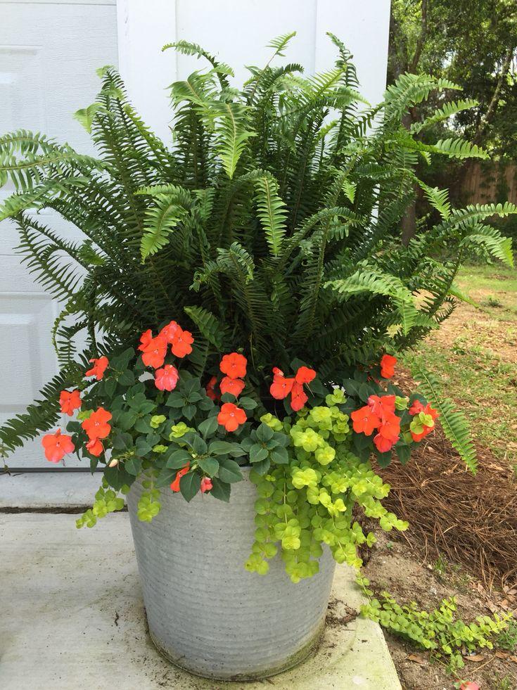 De 1649 b sta container gardening ideas bilderna p for Beautiful planters