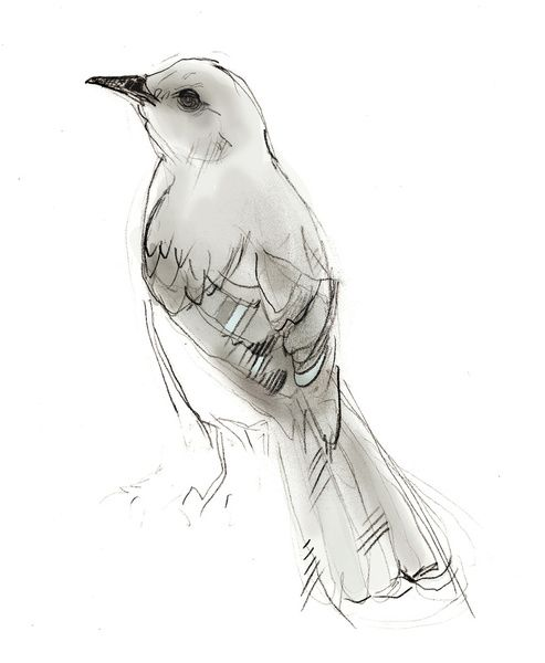 Hey Mockingbird Art Print