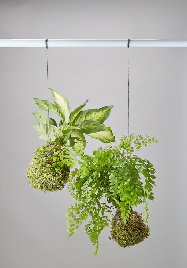 1000 Ideas About Hanging Wall Planters On Pinterest