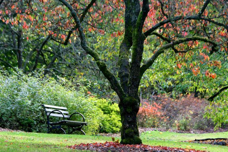 Quarry Shade Garden At Bon Air Park: 1000+ Images About St. Cloud MN Engagement Spots On Pinterest