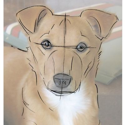 The next stage of drawing the dog is roughly sketching in the eyes, nose, mouth and the overall form of the muzzle, placing the ears.