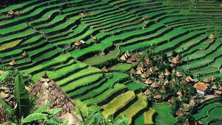 The largest island in the Philippines - Luzon: Batad Rice, Rice Me, Amazing Rice, Beautiful Places, Rice Terraces, Batad Village, Amazing Places, Philippines Luzon, Terraces Luzon