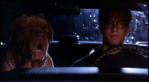 turner and hooch | ... _lens5670692module43978252photo_1246633241hanks-turner_and_hooch.jpg