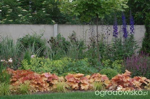 Ogród zmyślony - strona 187 - Forum ogrodnicze - Ogrodowisko