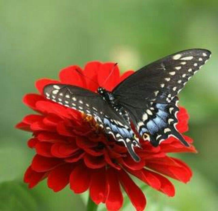 Butterflyv:)