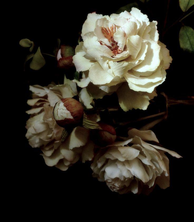 #peonies #coldporcelain #sugarflowers #likeapaint