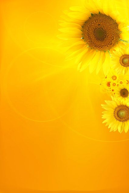 Sunflower picture background material-1 Download Free Vector,PSD,FLASH,JPG--www.fordesigner.com