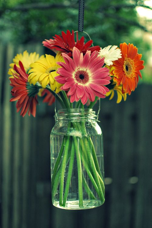 These are cute. Bouquets in Hanging Mason Jars: Mason Jars Flowers, Gerber Daisies, Gerberdaisi, Gerbera Daisies, Decor Ideas, Hanging Flowers, Bouquets, Hanging Mason Jars, Mason Jars Vase