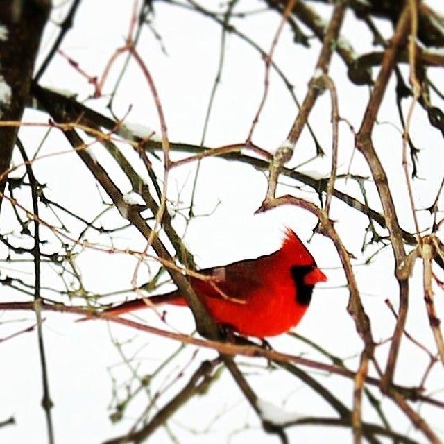 Faites comme le cardinal et montrez vos belles joues rouges dans les parcs provinciaux du Nouveau-Brunswick. | La faune au Nouveau-Brunswick, au Canada | Photo: @itserinelisabeth / Instagram #ExploreNB