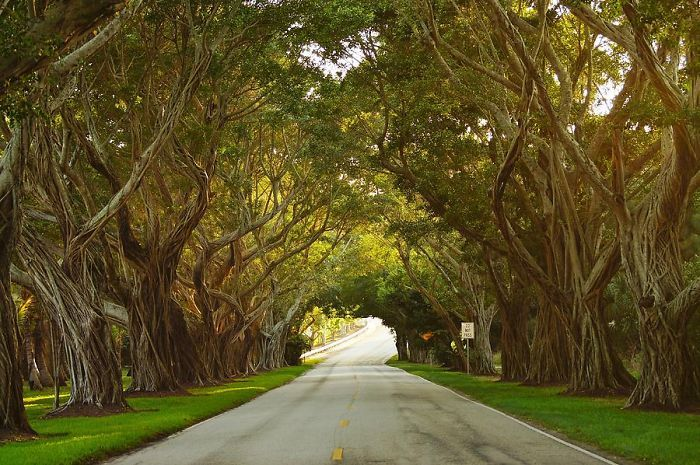 Bridge Road In Hobe Sound, Florida, Usa | Bored Panda