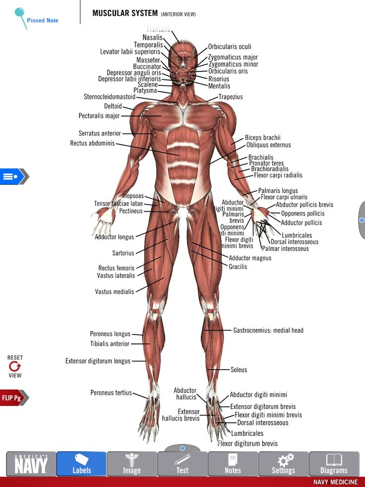 12 best Anatomy Study Guide images on Pinterest | Anatomy study ...