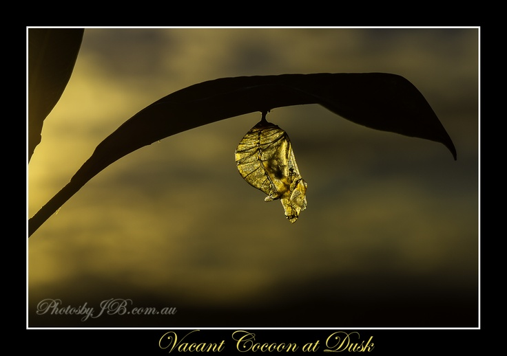 A lone Cocoon hangs, vacant as the sun sets.