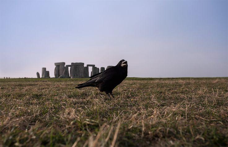 Prehistoric monument with crow. #Stonehenge #unitedkingdom #england #ufo #iwanttobelieve