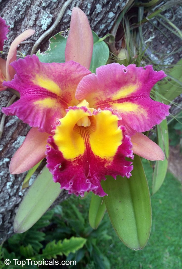 best orchideen images on pinterest nature plants and flowers
