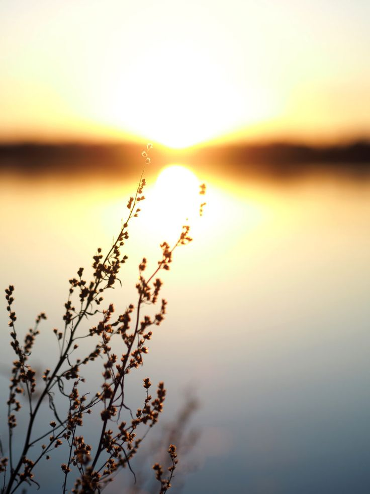 Sunset time | Pupulandia