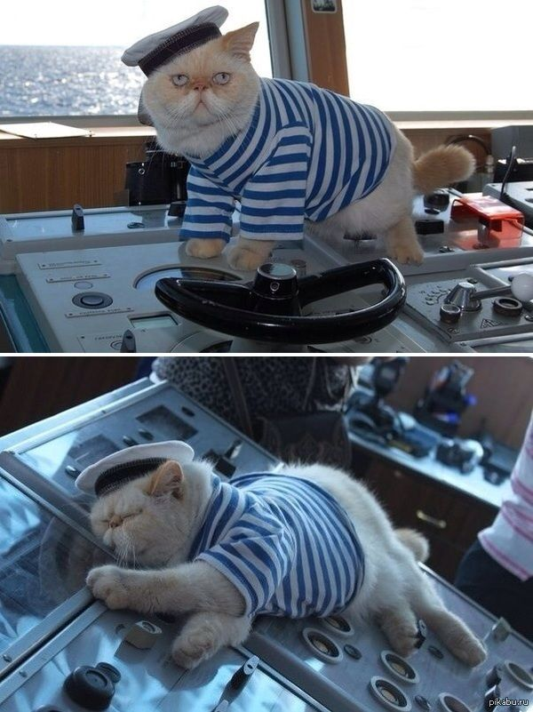 "Meet the captain cat - a resident of a #Russian heavy atomic battlecruiser ""Pyotr Velikij"" #smilingtimes"