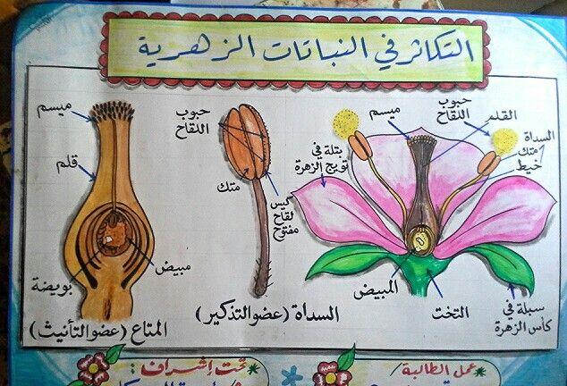 التكاثر في النباتات الزهرية School Learning Diy