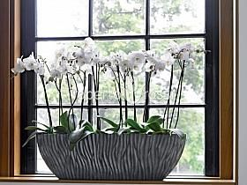 Natural herbs potted Phalaenopsis Plants First Choice River