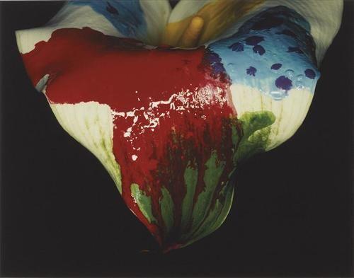 NOBUYOSHI ARAKI Painting Flower,2004