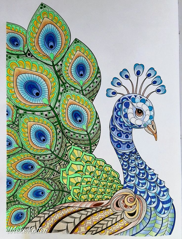 Peacock Mandala Style Peacock Art Peacock Drawing