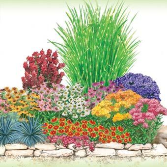 These plants thrive in hot, dry conditions, and will fill your yard with color over the entire summer! All plants shown in diagram below. Planting Instructions and Garden Plan included. Zones 5-8.