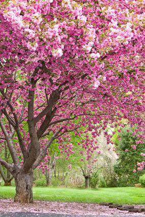 Весна. Теплые свет. Стремится к высвелению. Сочетание цветов противоположное