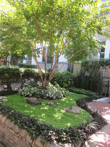 Good Trees For My Backyard :  myrtles on Pinterest  Gardens, Crepe myrtle trees and Front yards