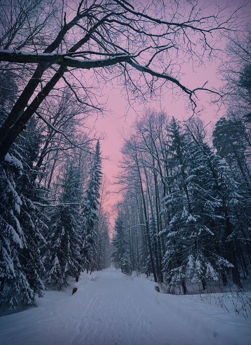 winter scene                                                                                                                                                                                 More
