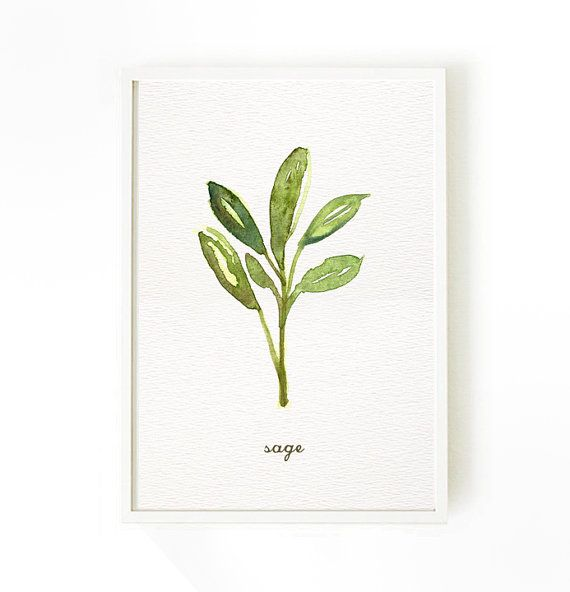 Herb watercolor painting Sage. Herb painting Kitchen by colorZen, $12.00