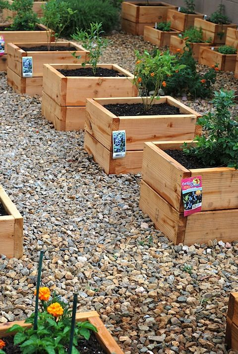 Mini raised beds, perfect for herbs to keep them from going crazy wild.