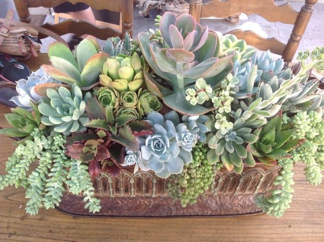 Simply Succulent Plant Designs- Los Angeles, Orange County - Medium