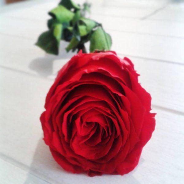 979 best images about f tez la saint valentin on pinterest art floral bijoux and mousse. Black Bedroom Furniture Sets. Home Design Ideas