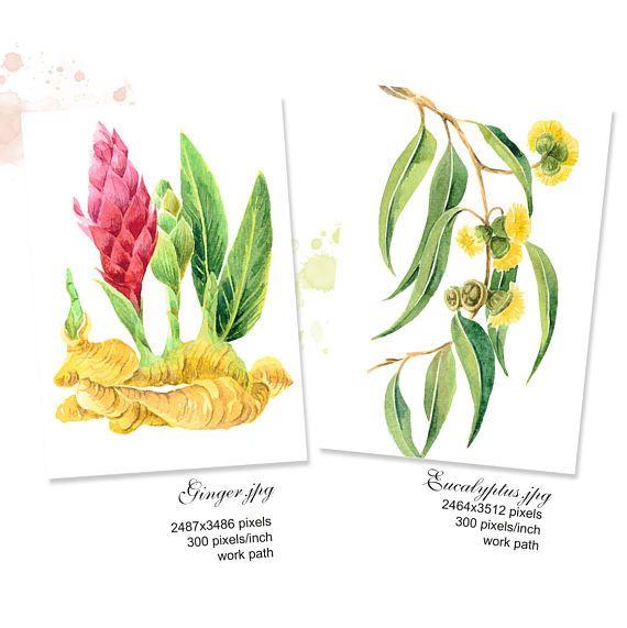 Botanical Watercolour Painting Printable set Ginger