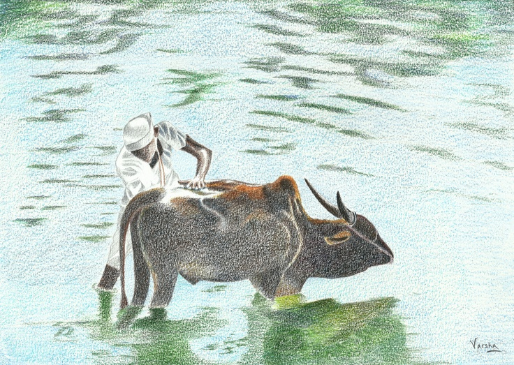 """""""Bathing bull"""" by Varsha.    Prismacolor Premier & Prismacolor Premier Verythin Colored pencils on Fabriano acid free paper."""
