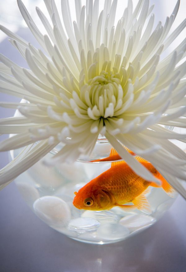 Goldfish wedding centerpiece with gorgeous white flower