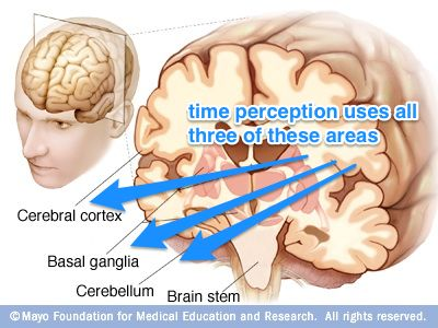 Time perception is related to how our brains process new information. More familiar information takes less time, making time seem to pass faster. From #AOTA006 » http://www.alloftheabove.audio/episodes/006